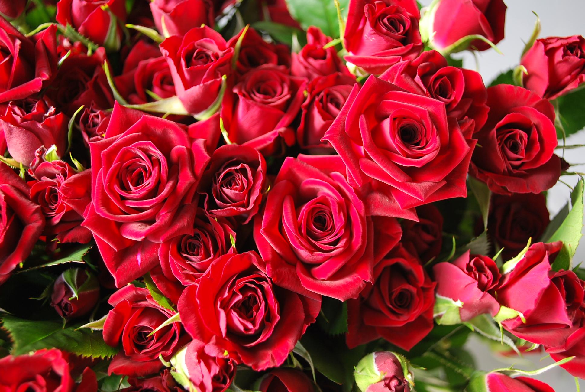 ローズドレスで口臭対策! バラの香りをまとって、注目の的に?!